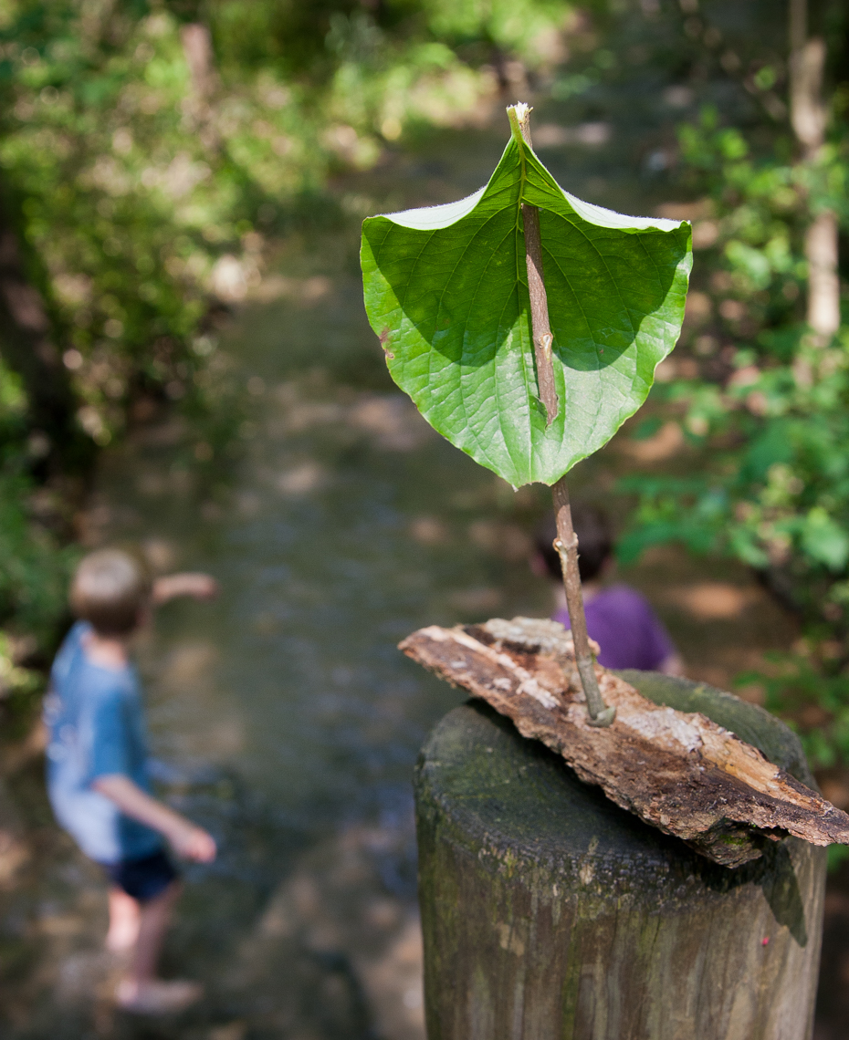 Boat made with a leaf and sticks; brothers exploring in a creek, Nashville, Tennessee