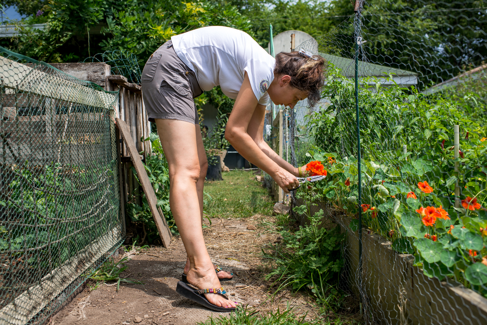Urban organic farm in Nashville, Tennessee