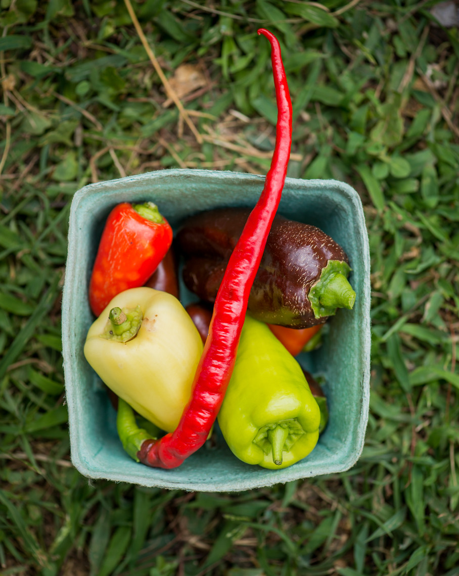 Tomatoes, Peppers, Urban Organic Farm, Nashville Tennessee, food photographer